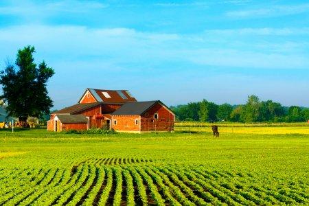 Дотації для фермерів: короткий аналіз державної підтримки на 2019рік